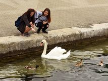 Geneva, Switzerland - June 05, 2017: Tourists and swan on the em royalty free stock image