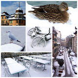 Geneva by winter, Switzerland, collage Royalty Free Stock Photography