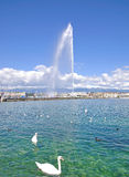 Geneve,Switzerland. The Water Fountain of Geneve on Lake Geneva Royalty Free Stock Photos