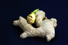 Gengibre Sprouted ou velho Fotografia de Stock Royalty Free