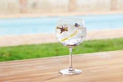 Genièvre d'anis et de cardamome d'étoile et cocktail de tonique image stock