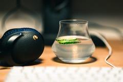 Genièvre et tonique avec des écouteurs sur un bureau fonctionnant photos stock