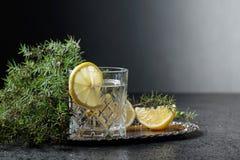 Genièvre, tonique avec des tranches de citron et un brin de genévrier photos libres de droits