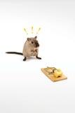 genialny szczur Zdjęcia Stock