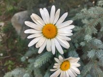 Genießen der vielen schönen Blumen des Sommers Stockfoto
