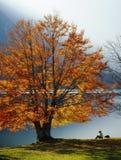 Genießen des Herbstes Lizenzfreie Stockbilder