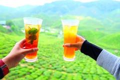 Genießen Sie Tassen Tee an den Teefeldern Stockbilder