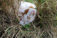 Geniet de slaap rood-witte landbouwbedrijf-kat van de zon stock afbeeldingen