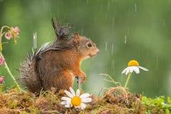Geniet van de regen Stock Foto