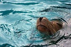 Genieten van van de verbinding zwemt Stock Fotografie