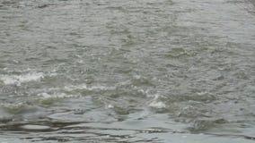 Genio agudo de la corriente del paisaje de la naturaleza del río de la montaña metrajes