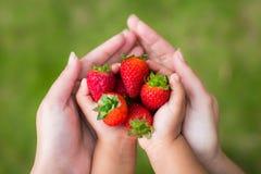 Genitore e bambino che mangiano insieme le fragole nel giardino immagine stock