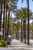 Genoa Genova - Walking alley with tall palm trees in the Old Harbor. Genoa Genova, Italy - Walking alley with tall palm trees in the Old Harbor royalty free stock photos
