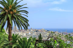 Genoa old city view with palm. From above royalty free stock image
