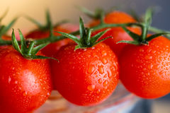 Genomblöta röda tomater Arkivbild