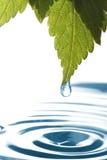 genomblött leafvatten Royaltyfria Foton