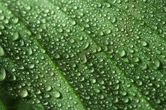 genomblött leafvatten Arkivfoto