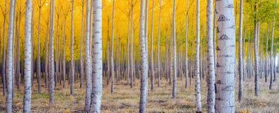 Genomdränkt Tree Royaltyfria Bilder