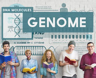 Genome Coding Biology Cell DNA Identity Stem Concept.  royalty free stock image