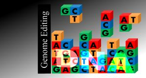 Genome editing Royalty Free Stock Photo