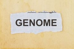 Genome in a newspaper cut out. Genome newspaper cut out in an old paper background Royalty Free Stock Image