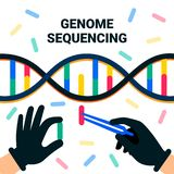 Genome sequencing concept. Nanotechnology and biochemistry laboratory. The hands of a scientist working with a dna helix. Genome or gene structure. Human stock illustration