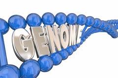 Genome Word DNA Strand Genetics Heredity Stock Photography