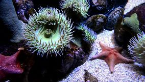 Genomen in de wildernis, geen aquarium stock video