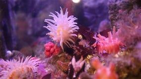 Genomen in de wildernis, geen aquarium stock videobeelden