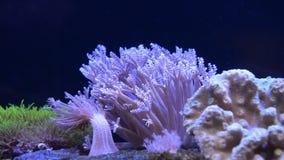 Genomen in de wildernis, geen aquarium stock footage