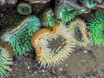 Genomen in de wildernis, geen aquarium Stock Foto's