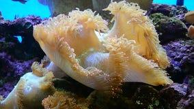Genomen in de wildernis, geen aquarium HD stock footage