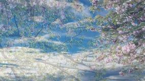 Genomskinlig blom- bakgrund, över himmelbakgrund med mjuka vita moln royaltyfri fotografi