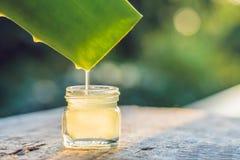 Genomskinlig extrakt från den aloevera växten dryper från sidor, Royaltyfri Bild