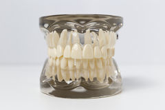 Genomskinlig tandprotesmodell över vit bakgrund Arkivfoto