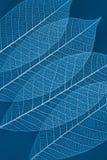 genomskinlig torr leaf Arkivfoto