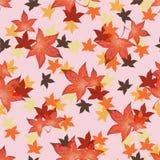 Genomskinliga Autumn Leaves Arkivbilder