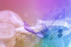 Genomskinliga sidor med en härlig bokeh Makro av genomskinliga sidor Mång--färgad härlig bakgrund Royaltyfria Bilder