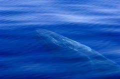 genomskinligt hav fotografering för bildbyråer