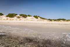 Genomskinligt hav och kristallklart vatten av Sardinia royaltyfri bild