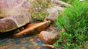 Genomskinligt vatten av den lilla bergfloden bland runda stenar stock video
