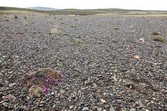 Genomsnittligt icelandic landskap - lång tid efter vulkanutbrott Arkivfoto