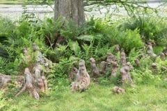 Genoux de Cypress Images libres de droits