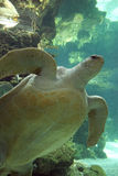 Genova aquarium (Italy) Royalty Free Stock Photography