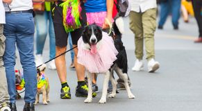 Genova Pride Parade 2019. Genova Pride Parade on 15.06.2019. The parade was from via Balbi to piazza de Ferrari. Colorful dressed dogs with their owners in the royalty free stock image