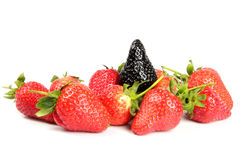 Genovariation. Red and black strawberry isolated on white background Stock Photos