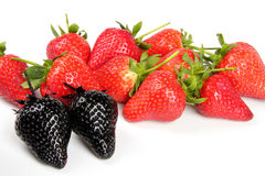Genovariation. Red and black strawberry isolated on white background Stock Photo