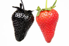 Genovariation. Red and black strawberry isolated on white background Royalty Free Stock Photo