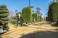 Genoves Park Cadiz Andalusia Spain Stock Images