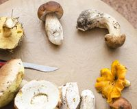 Genre différent de champignons Images stock